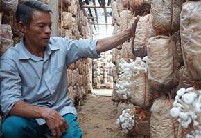 Thay đổi cuộc sống nhờ trồng nấm
