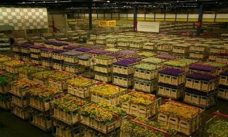 TP HCM bắt tay Đà Lạt lập chuỗi cung ứng hoa chất lượng cao